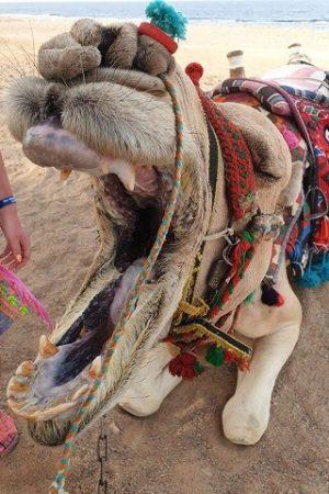 wycieczka na pustynie z biurem Sfinks